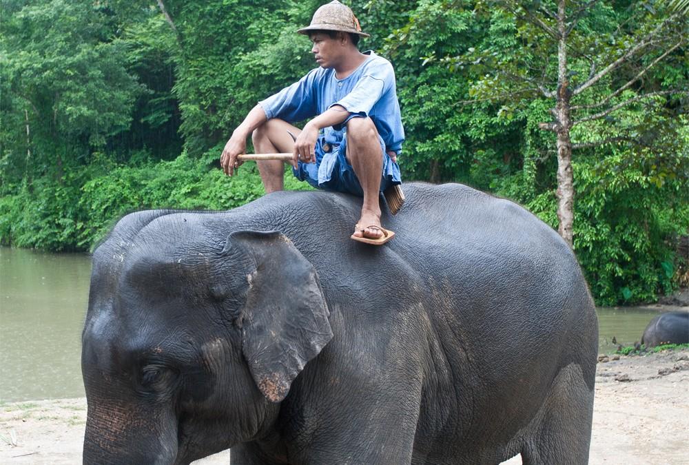 Al servicio de los elefantes