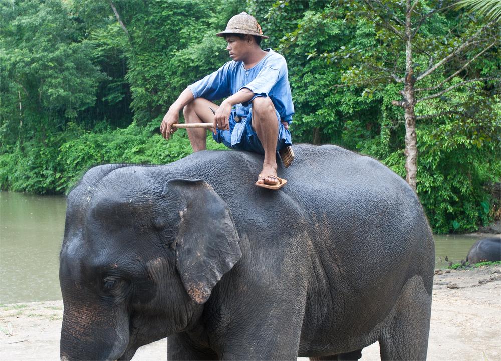 Adiestrador-de-elefantes