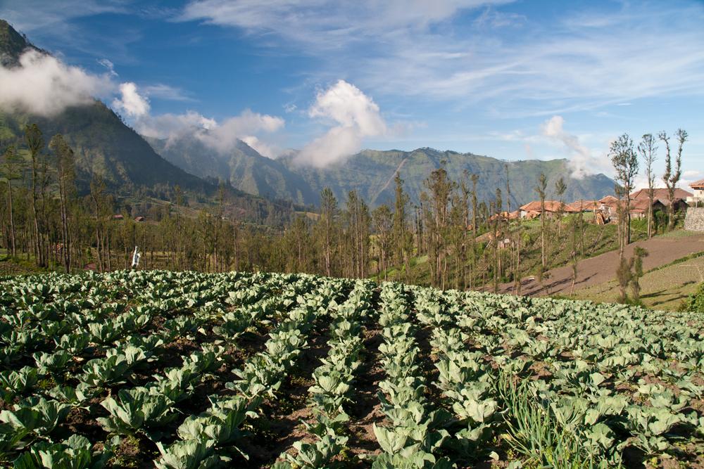 Agricultura-en-la-region