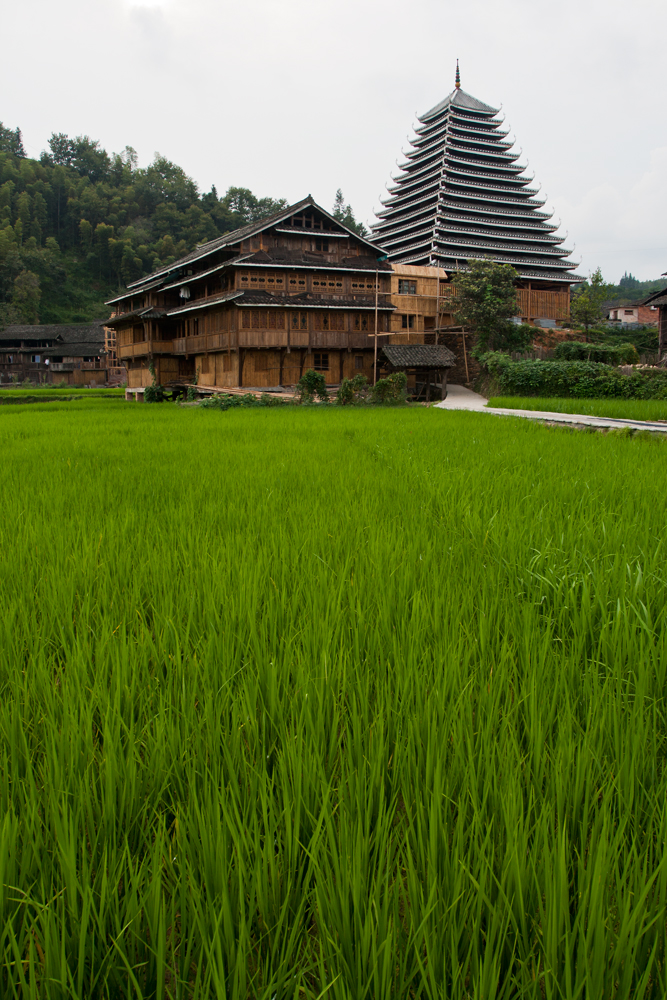 Arroz-en-Chengyang