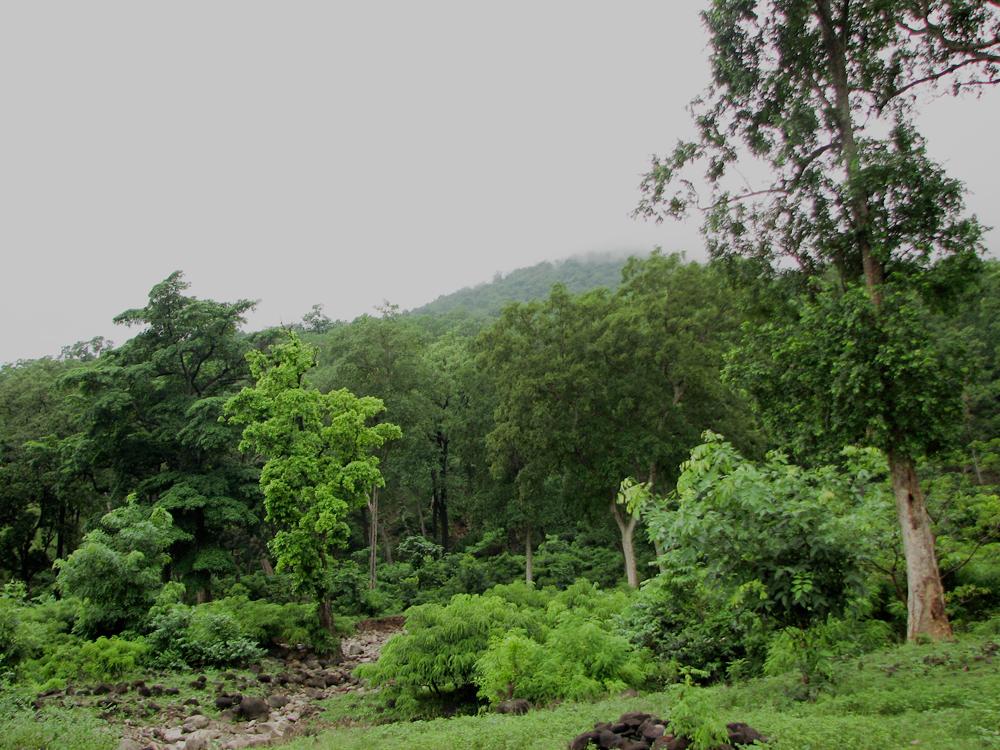 Bosque-humedo