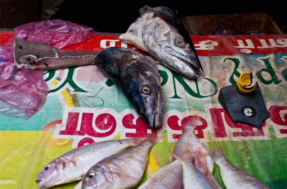 Cabezas-de-pescado-en-Chinatown
