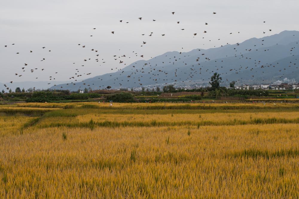 Campos-de-cultivo-II