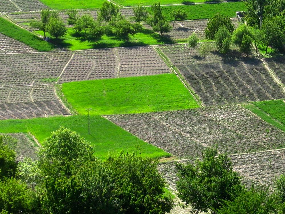 Campos-de-cultivo-en-Nagar