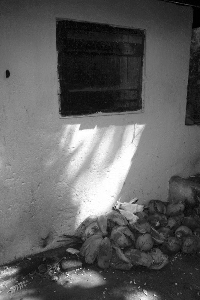 Cocos-y-ventana