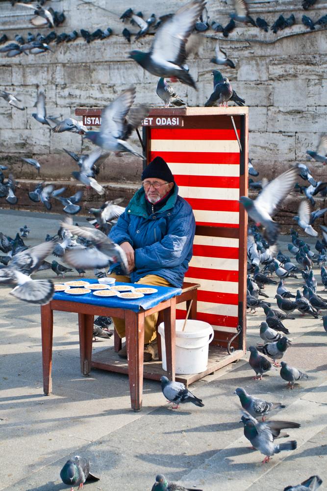 Comida-para-palomas