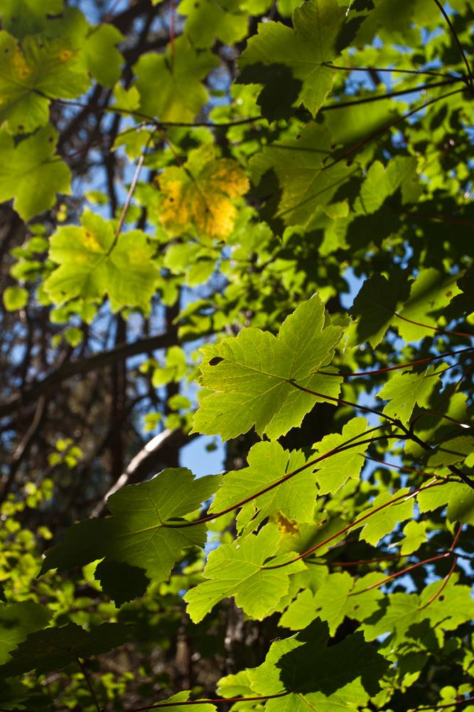 Contraluz-de-hojas-II