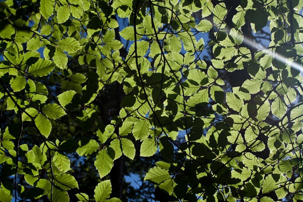 Contraluz-de-hojas