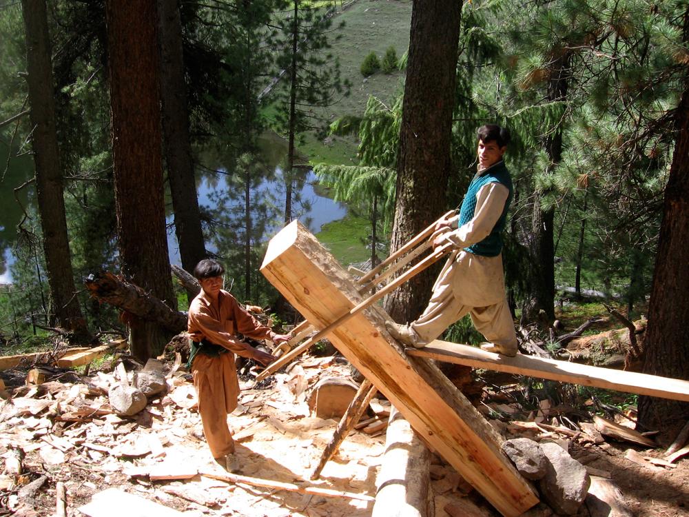 Cortando-madera