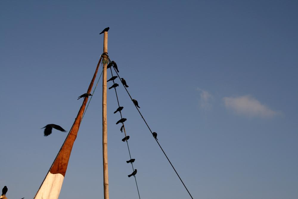 Cuervos-y-mastiles