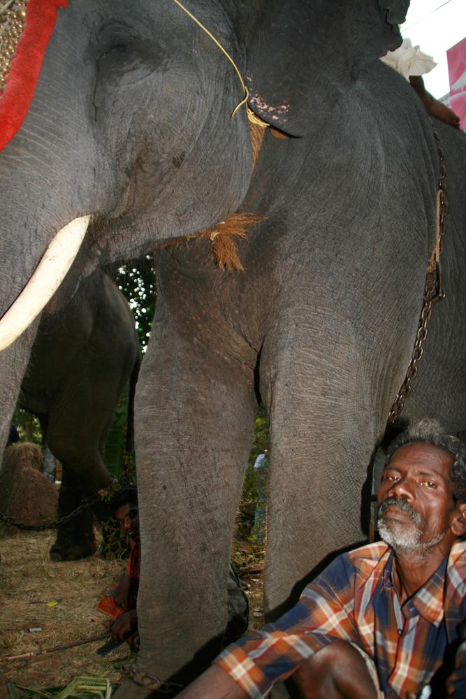 Cuidador-de-elefantes