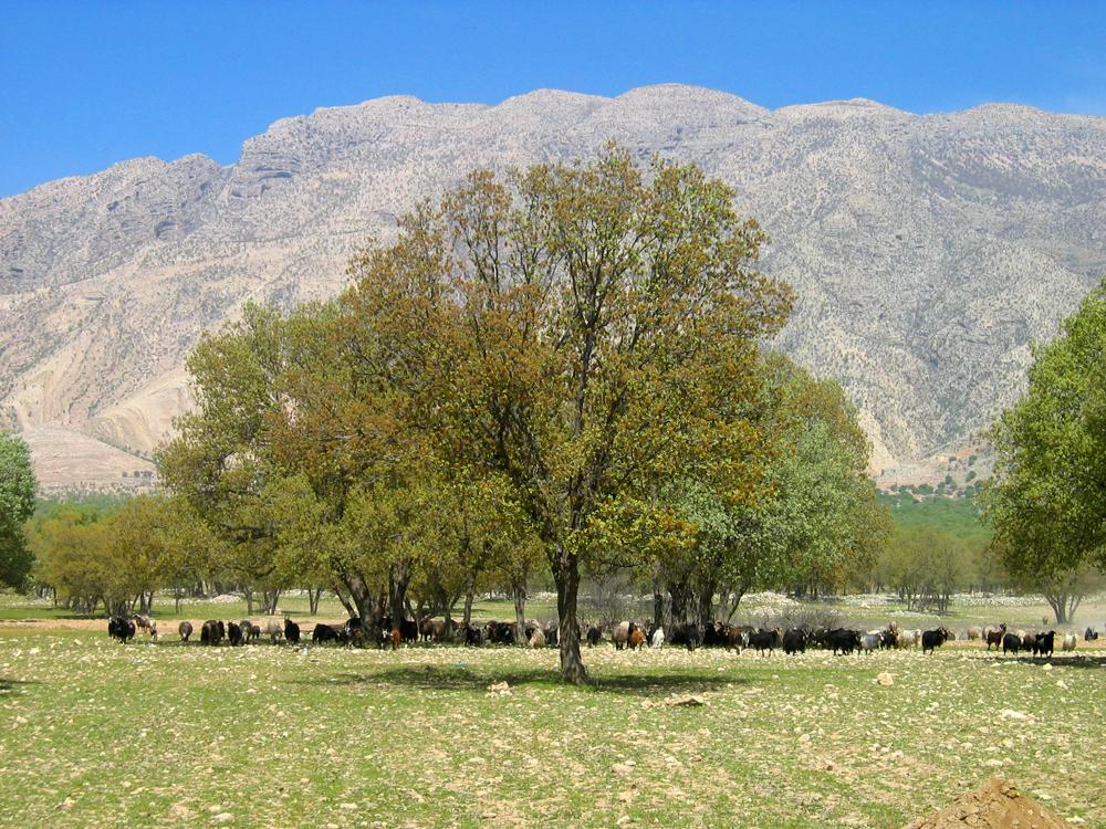 Dehesa-al-norte-de-Kazerun-II