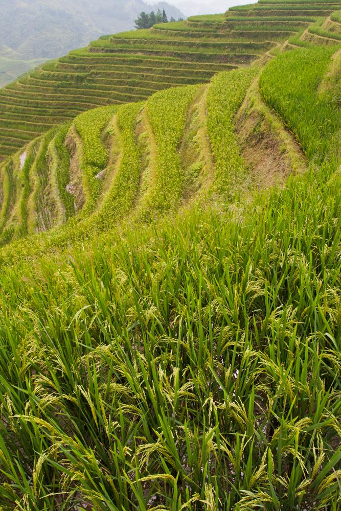 Detalle-de-arroz