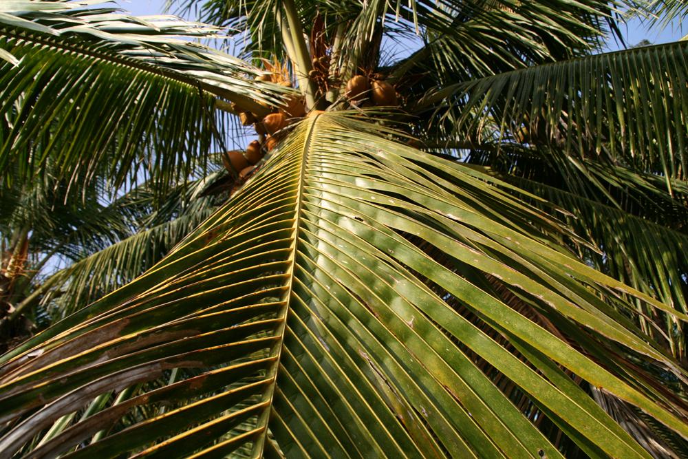 Detalle-de-palmera