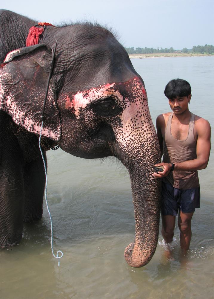 El-cuidador-de-elefantes