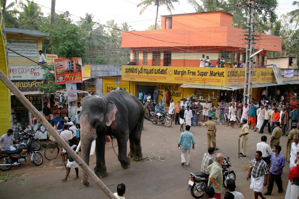 Elefante-camino-del-festival