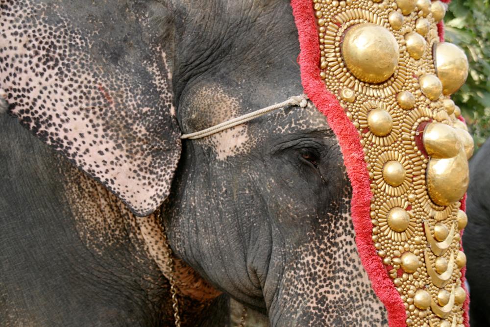 Elefante-engalanado