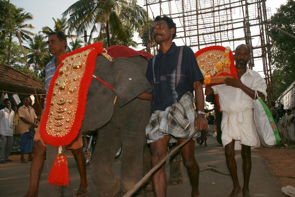 Elefante-joven