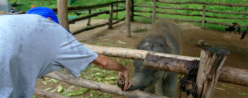 Elefantes-de-Lampang