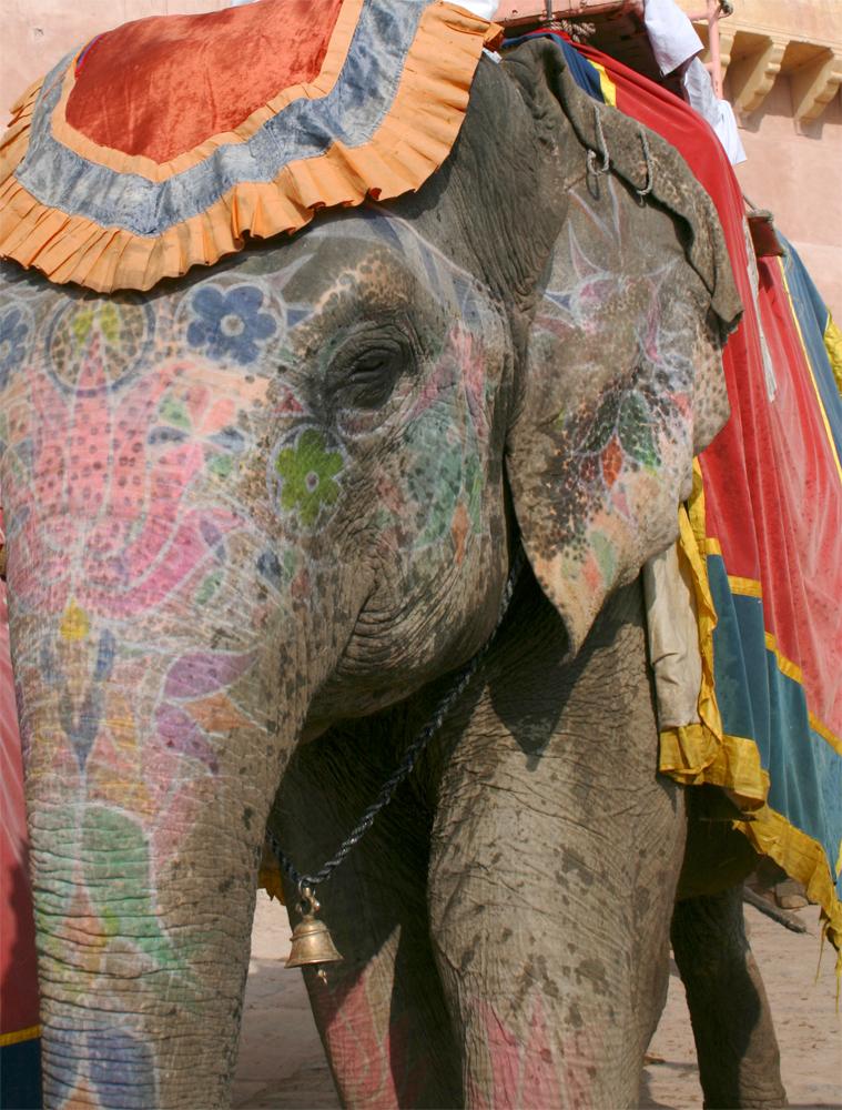 Elefantes-para-turistas-en-Amber