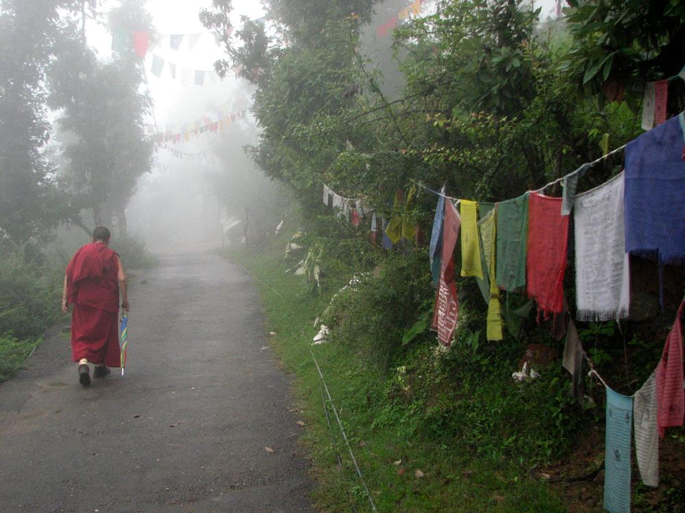 Entre-la-niebla