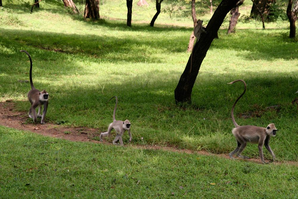 Familia-de-monos