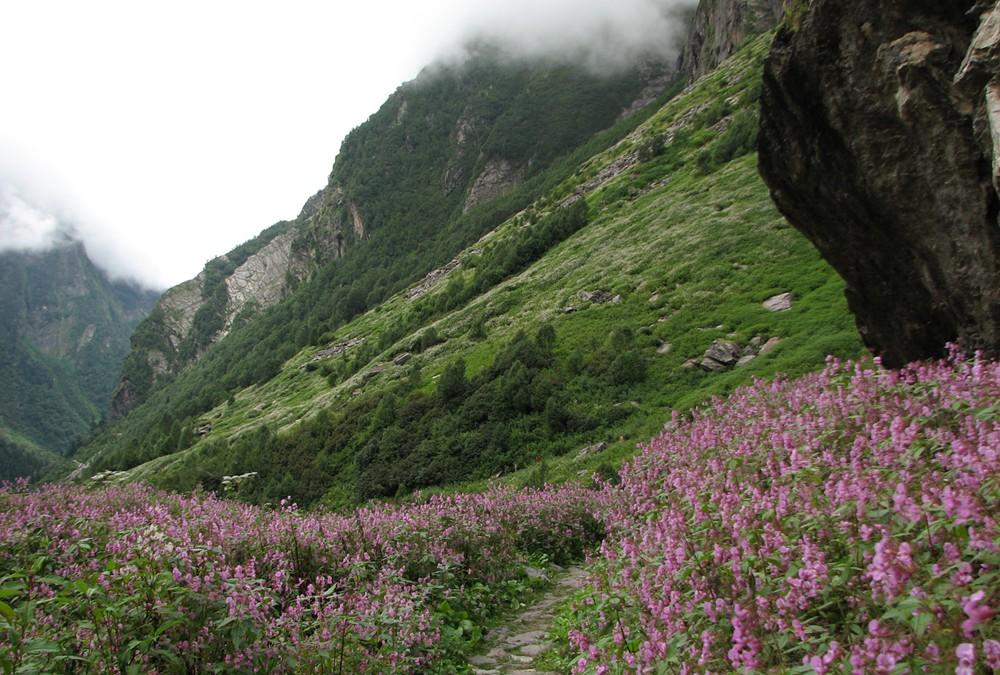 El valle de las flores