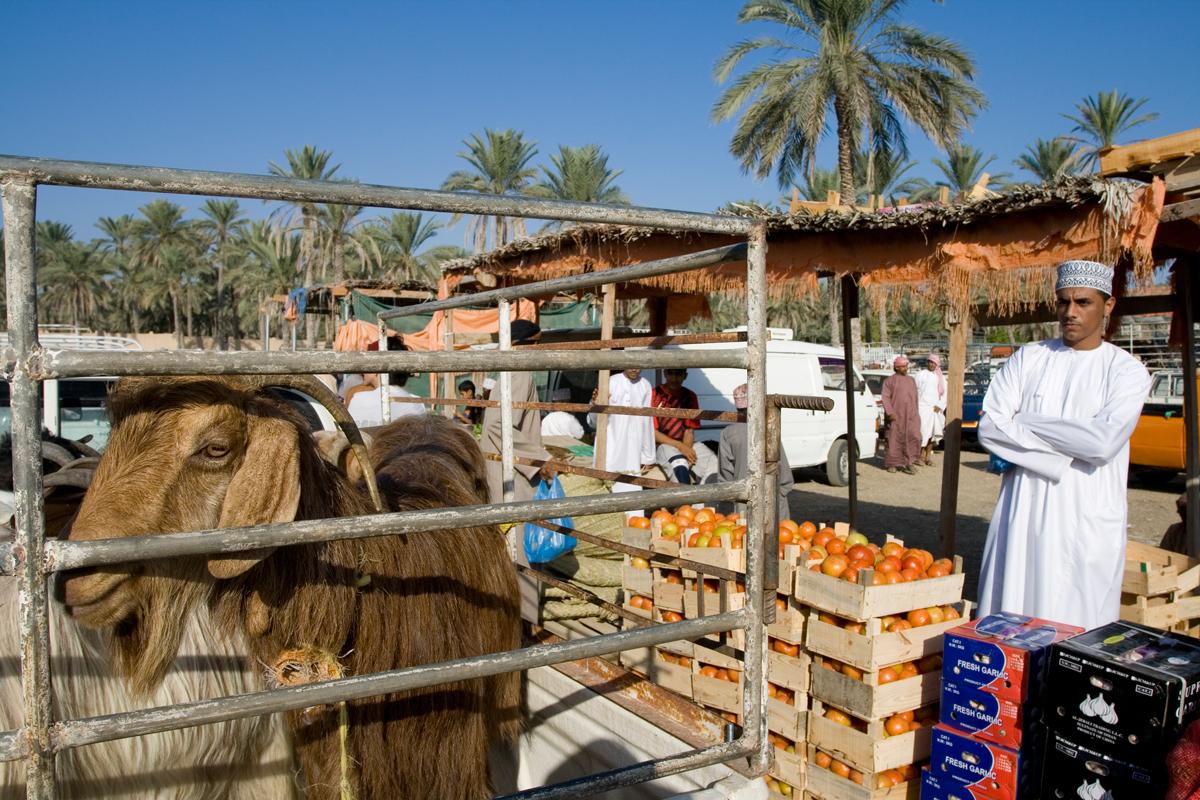 Mercado de ganado III