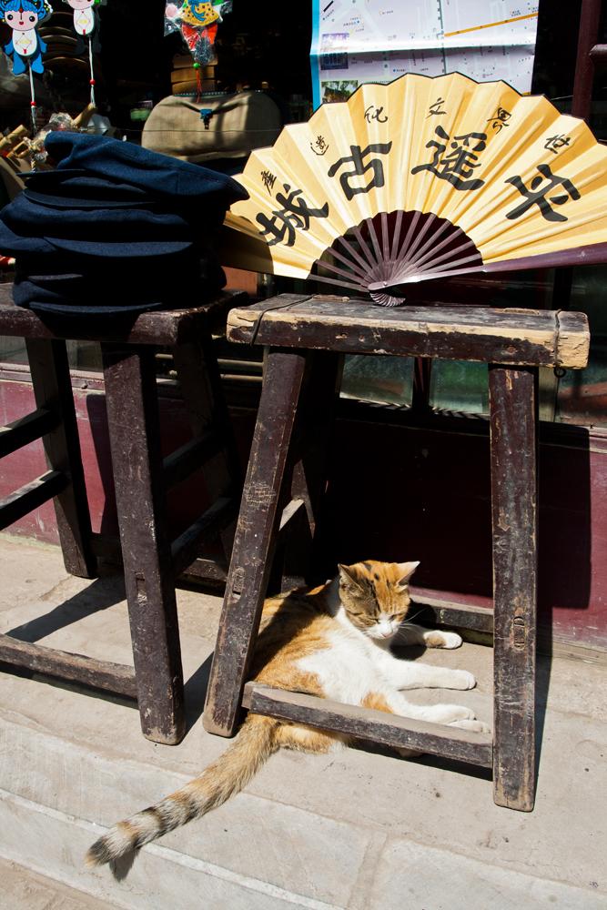 Gato-y-abanico