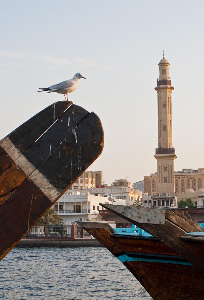 Gaviota-y-minarete