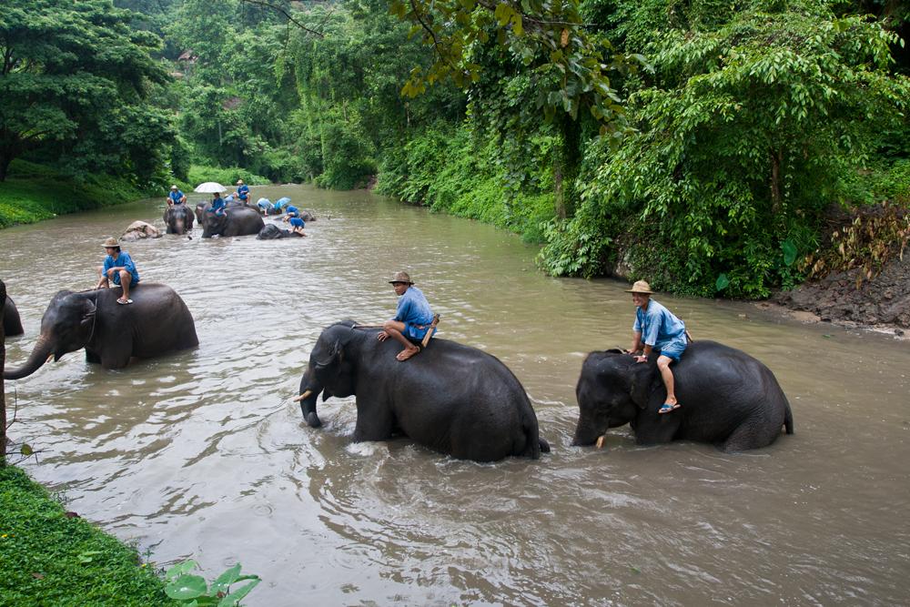 Grupo-de-elefantes