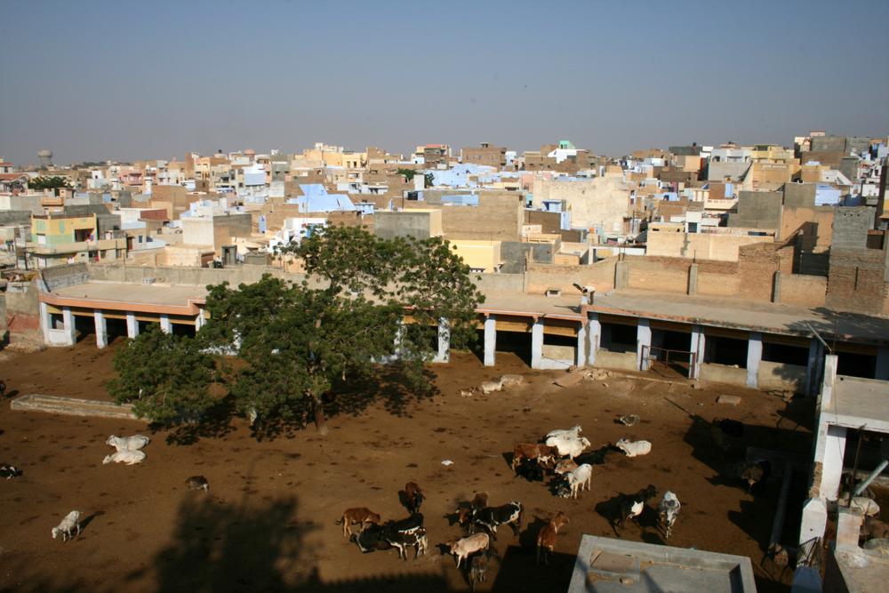 Hospital-para-vacas