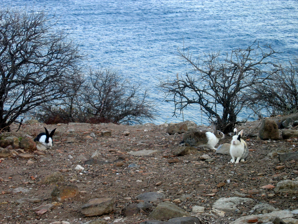 Isla-de-los-conejos-en-Gümüslük