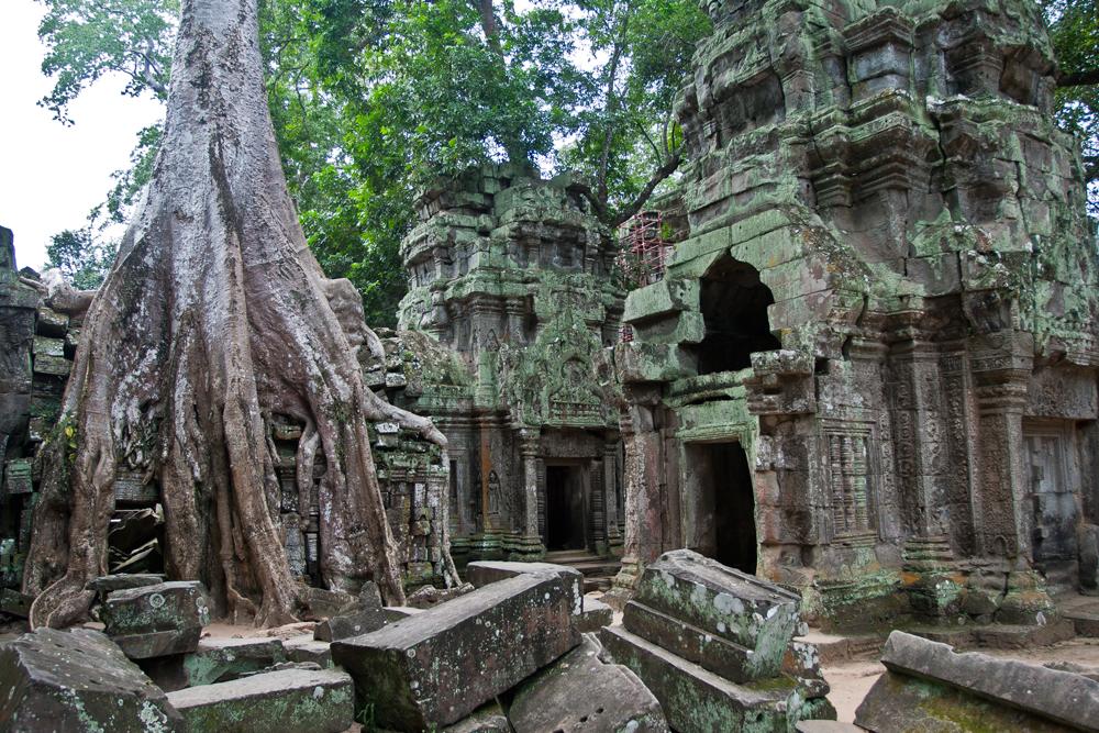La-jungla-se-come-a-Angkor-II