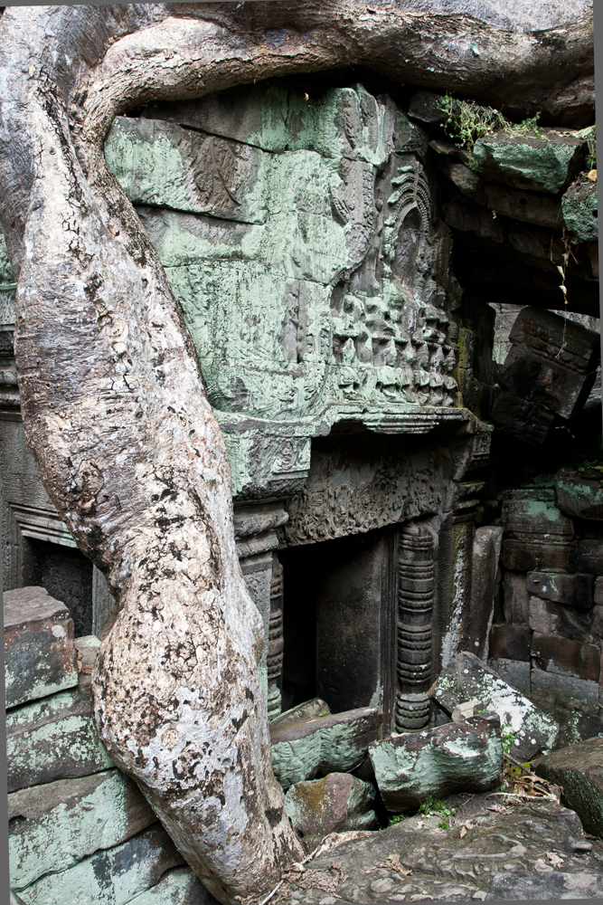 La-jungla-se-come-a-Angkor-III