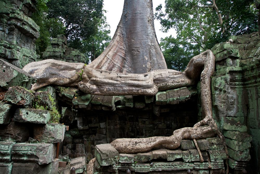La-jungla-se-come-a-Angkor-IV