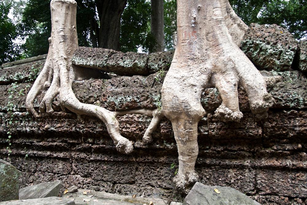La-jungla-se-come-a-Angkor-IX