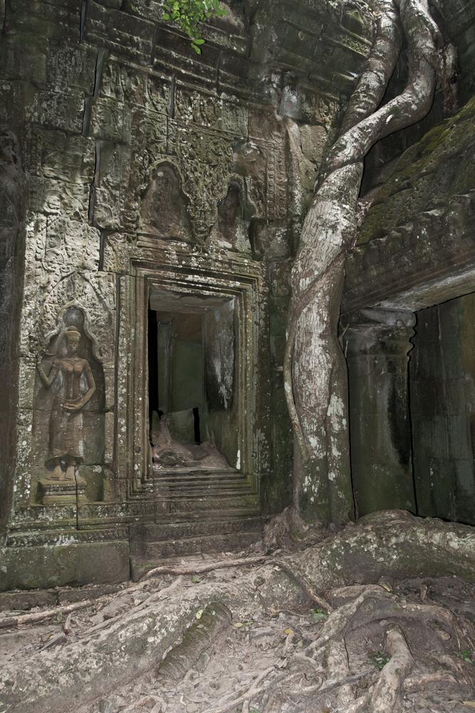 La-jungla-se-come-a-Angkor-VI