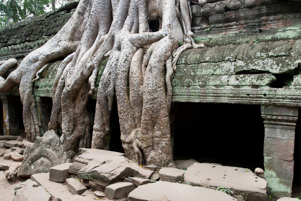 La-jungla-se-come-a-Angkor-X