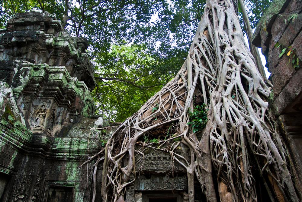 Angkor, templos y jungla