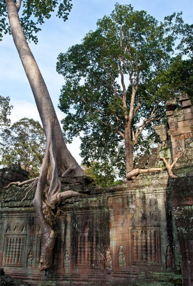 La-jungla-se-come-a-Angkor-XII