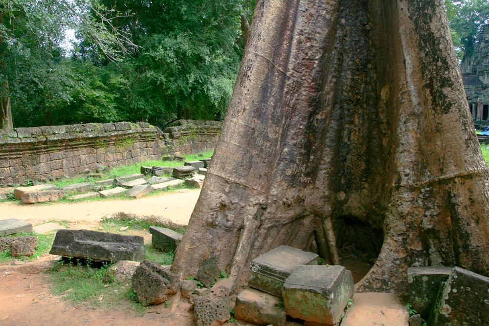 La-jungla-se-come-a-Angkor-XIII