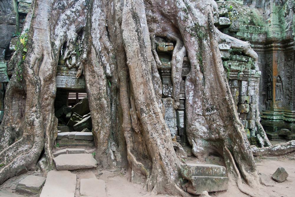 La-jungla-se-come-a-Angkor