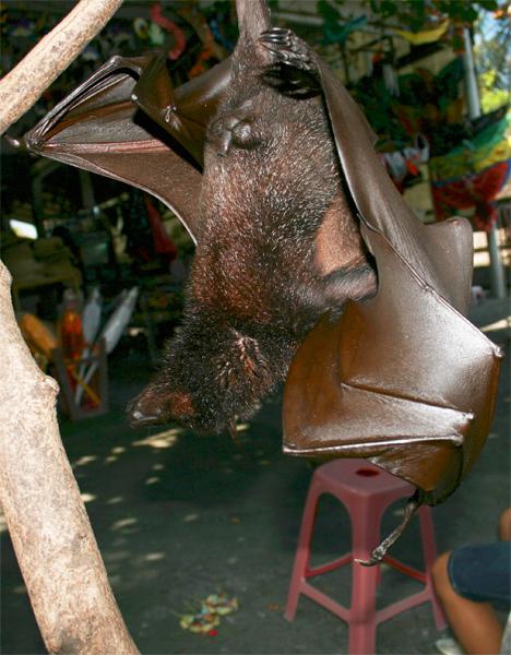 Llegada-a-Bali-II