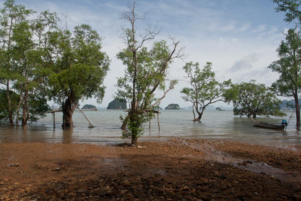 Manglar-del-mar-de-Andaman