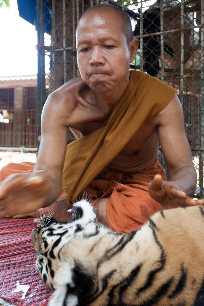 Monje-y-tigre
