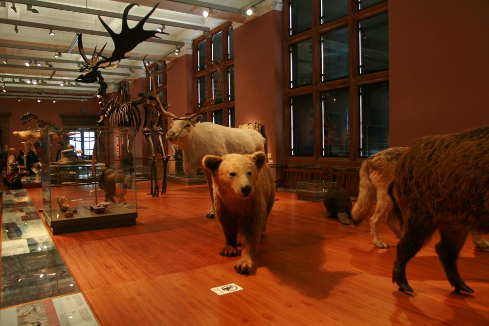 Museo-Kelvingrove-de-Glasgow-III