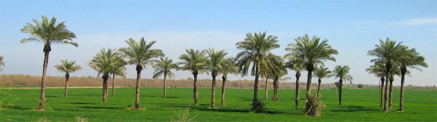 Oasis-en-Khuzestan