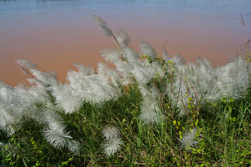 Orillas-del-Mekong