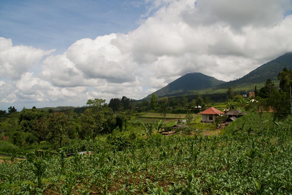 Paisaje-camino-de-Lovina-II